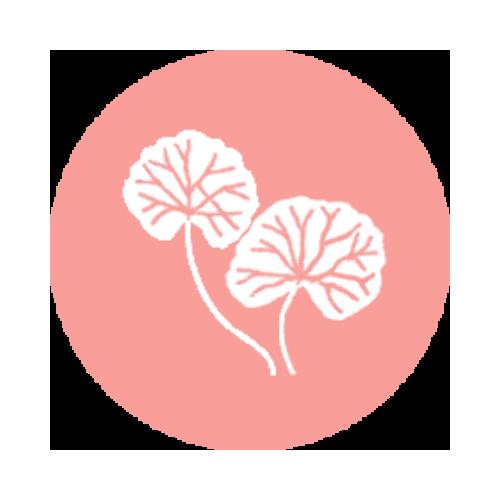 Kosmetyki z wąkrotką azjatycką (Centella Asiatica) | Sklep MISUN